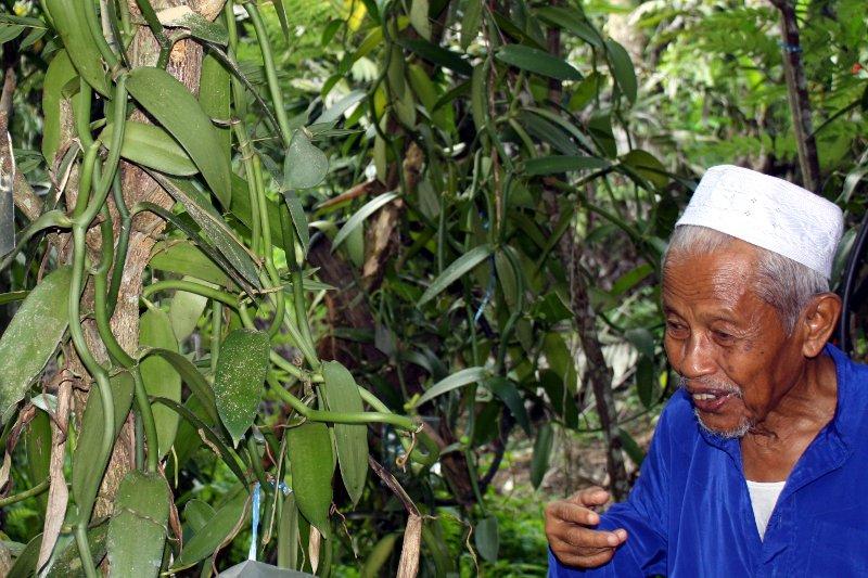 one of his vanilla trees