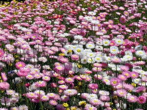 Flowers at Perth's Kings Park, from my September 2006 trip